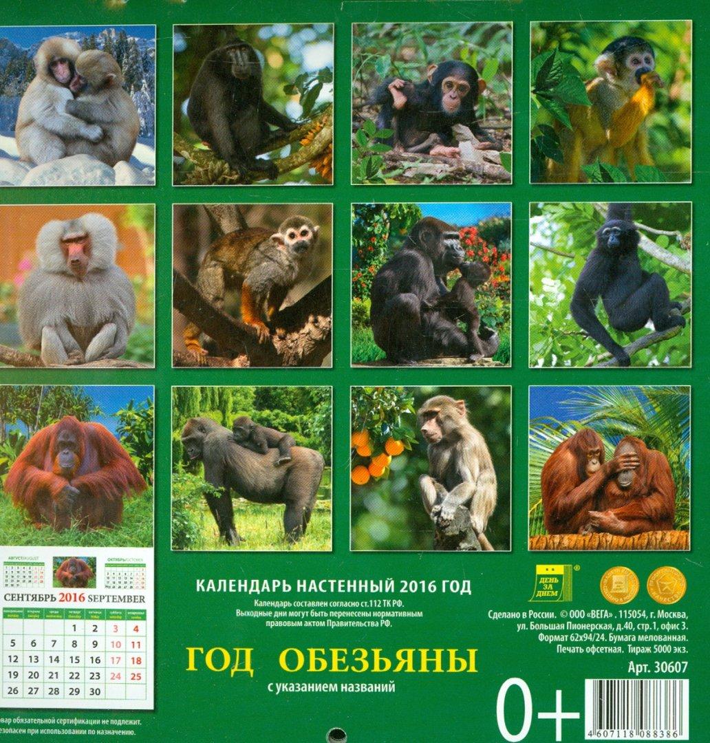 Картинки обезьяны для календаря