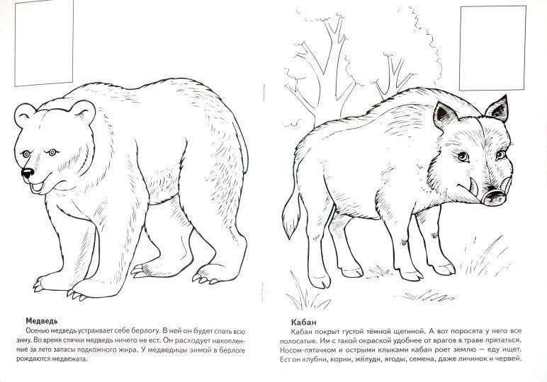 животные европы книжка раскраска с наклейками