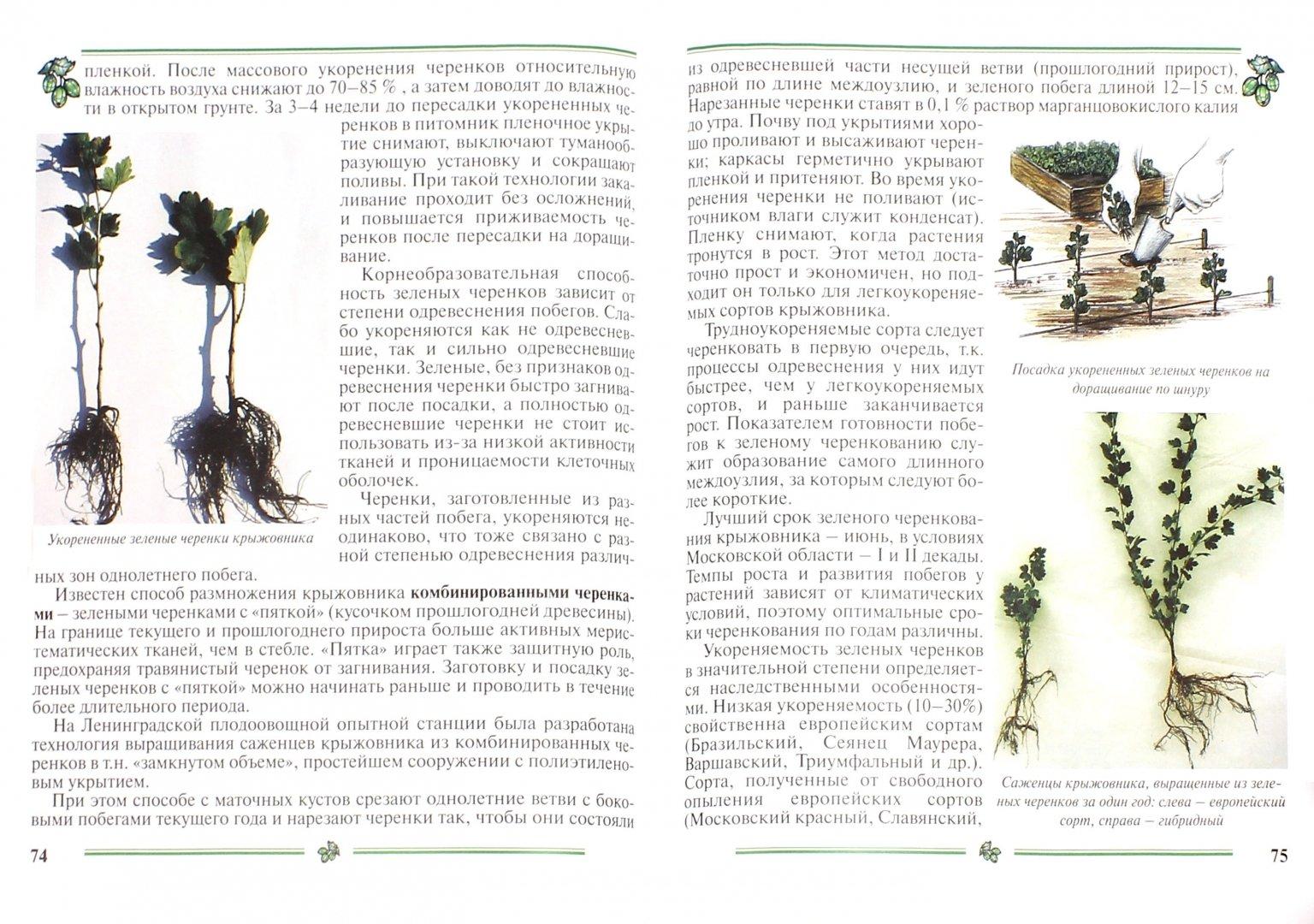 Иллюстрация 1 из 22 для Крыжовник. Пособие для садоводов-любителей - Ольга Аладина | Лабиринт - книги. Источник: Лабиринт