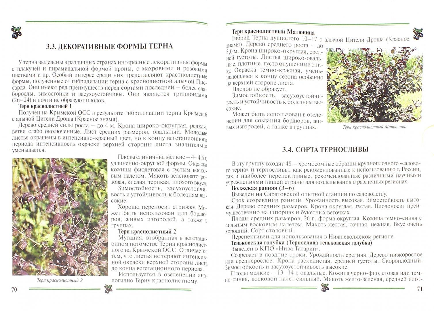 Иллюстрация 1 из 13 для Терн и тернослива. Пособие для садоводов-любителей - Ковалева, Еремин | Лабиринт - книги. Источник: Лабиринт