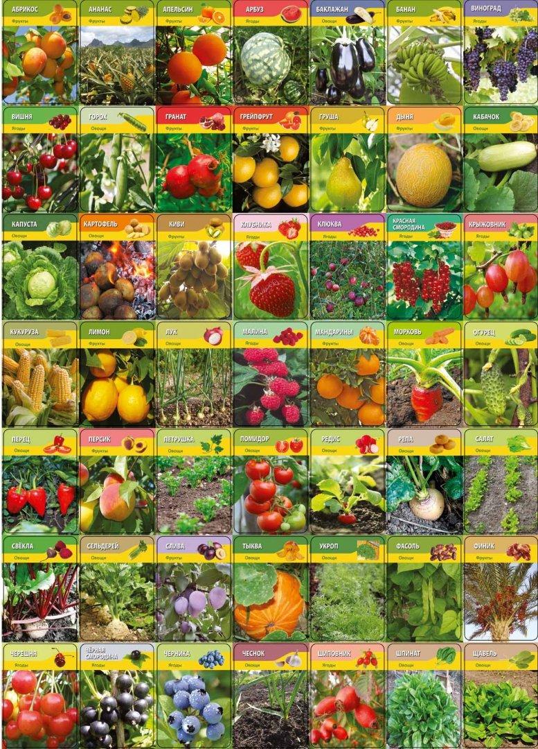 список всех овощей с фото