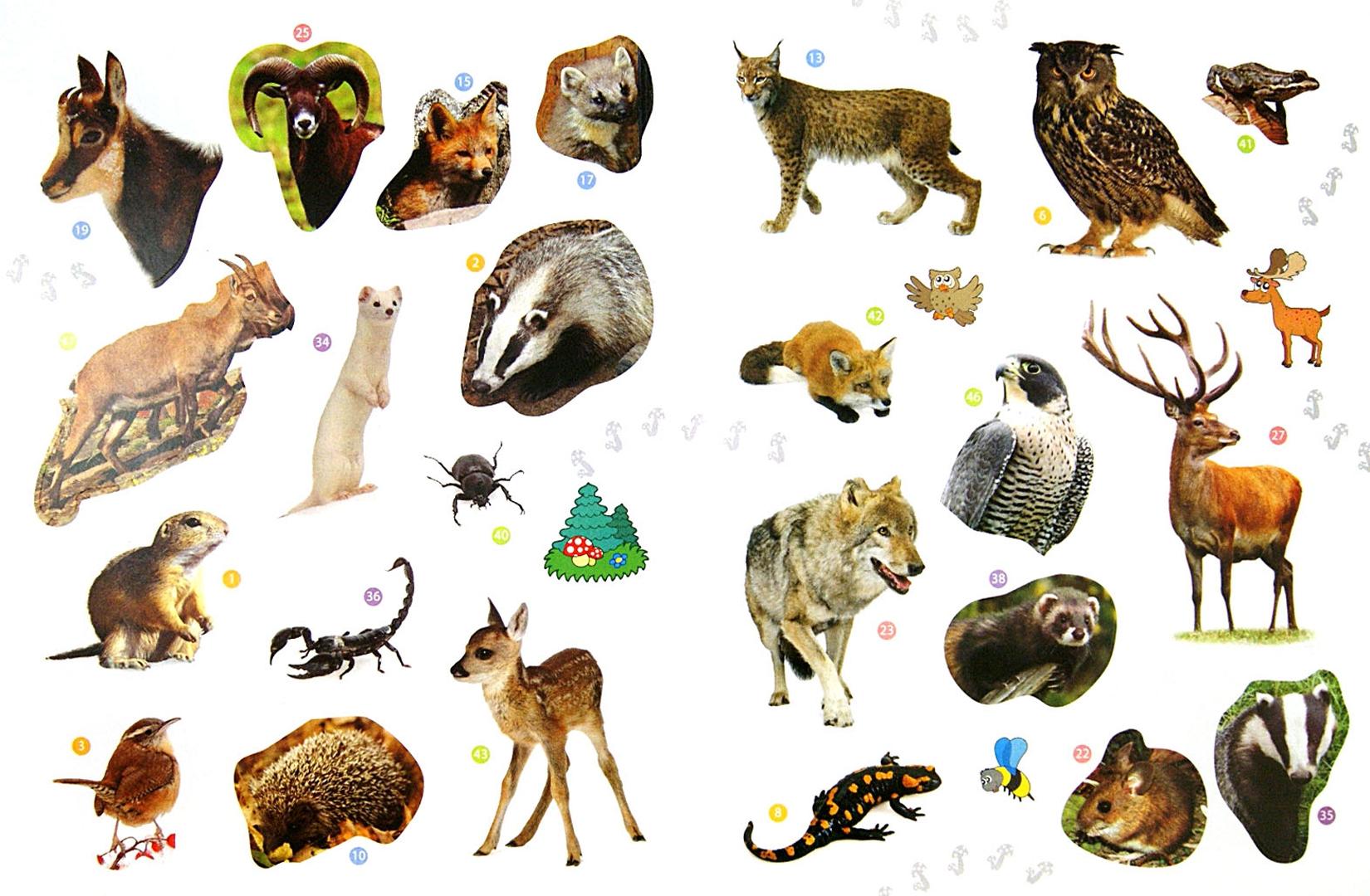Картинки для печати с дикими животными
