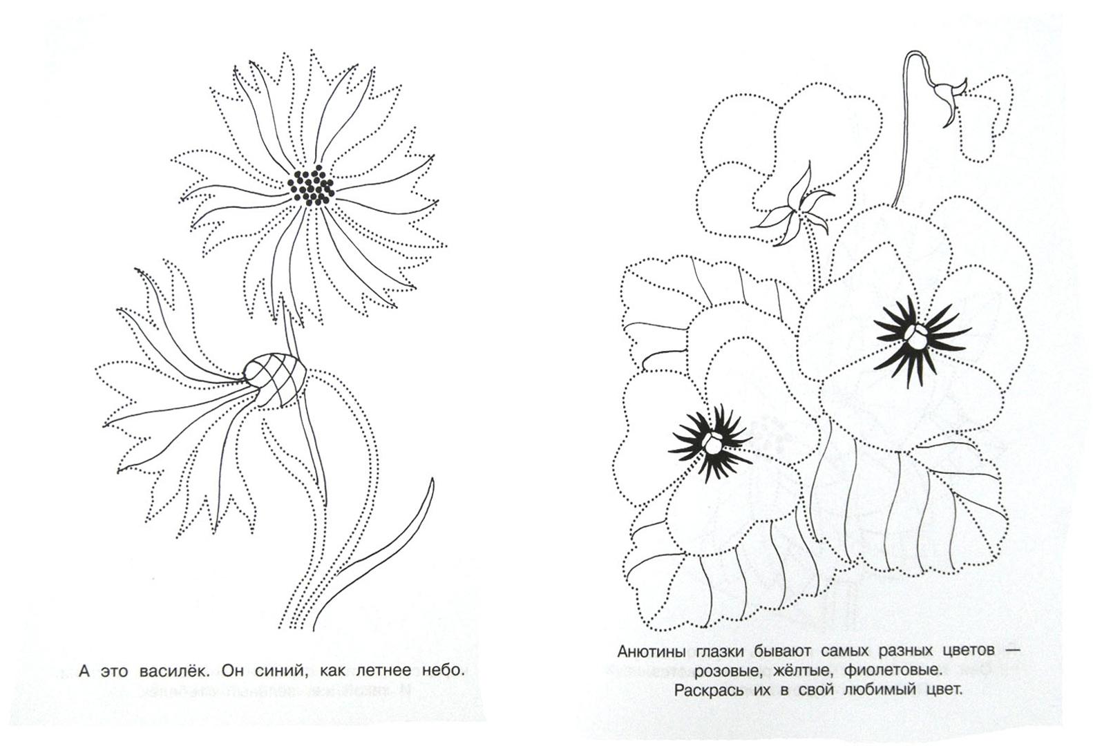 Цветок обвести картинки