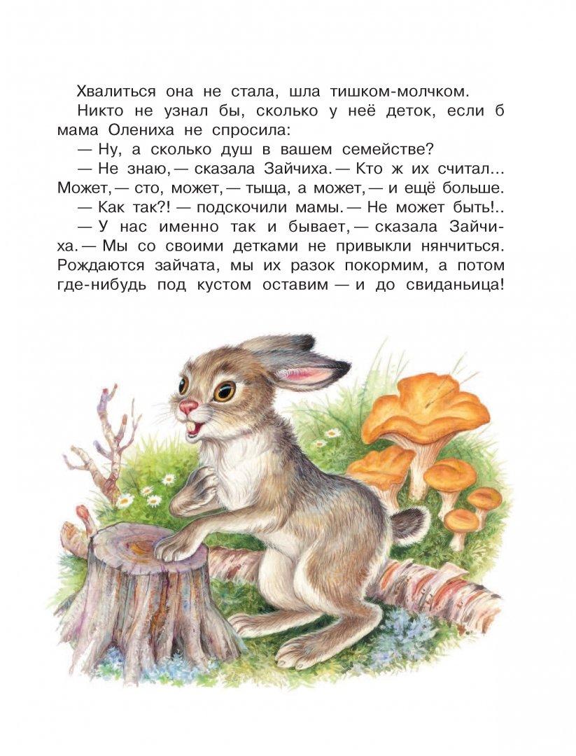 Шим приключения зайца картинки