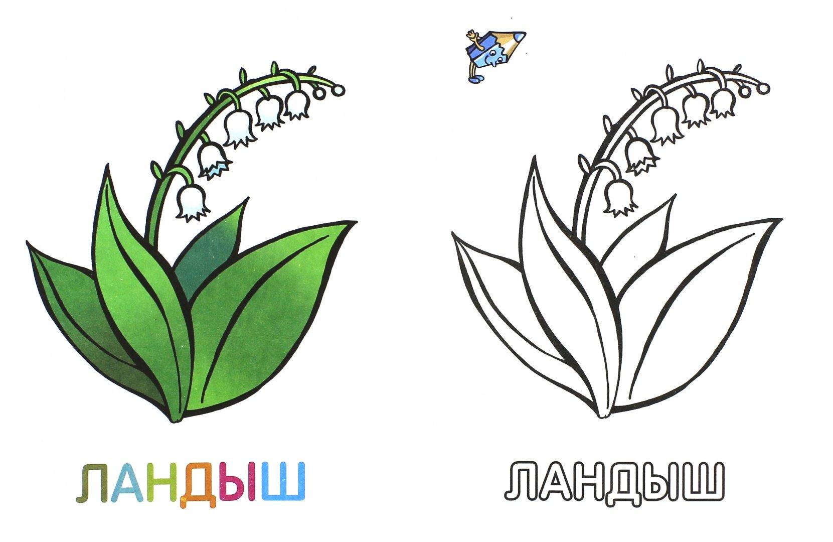 """Иллюстрация 1 из 33 для Раскраска для малышей """"Цветы ..."""
