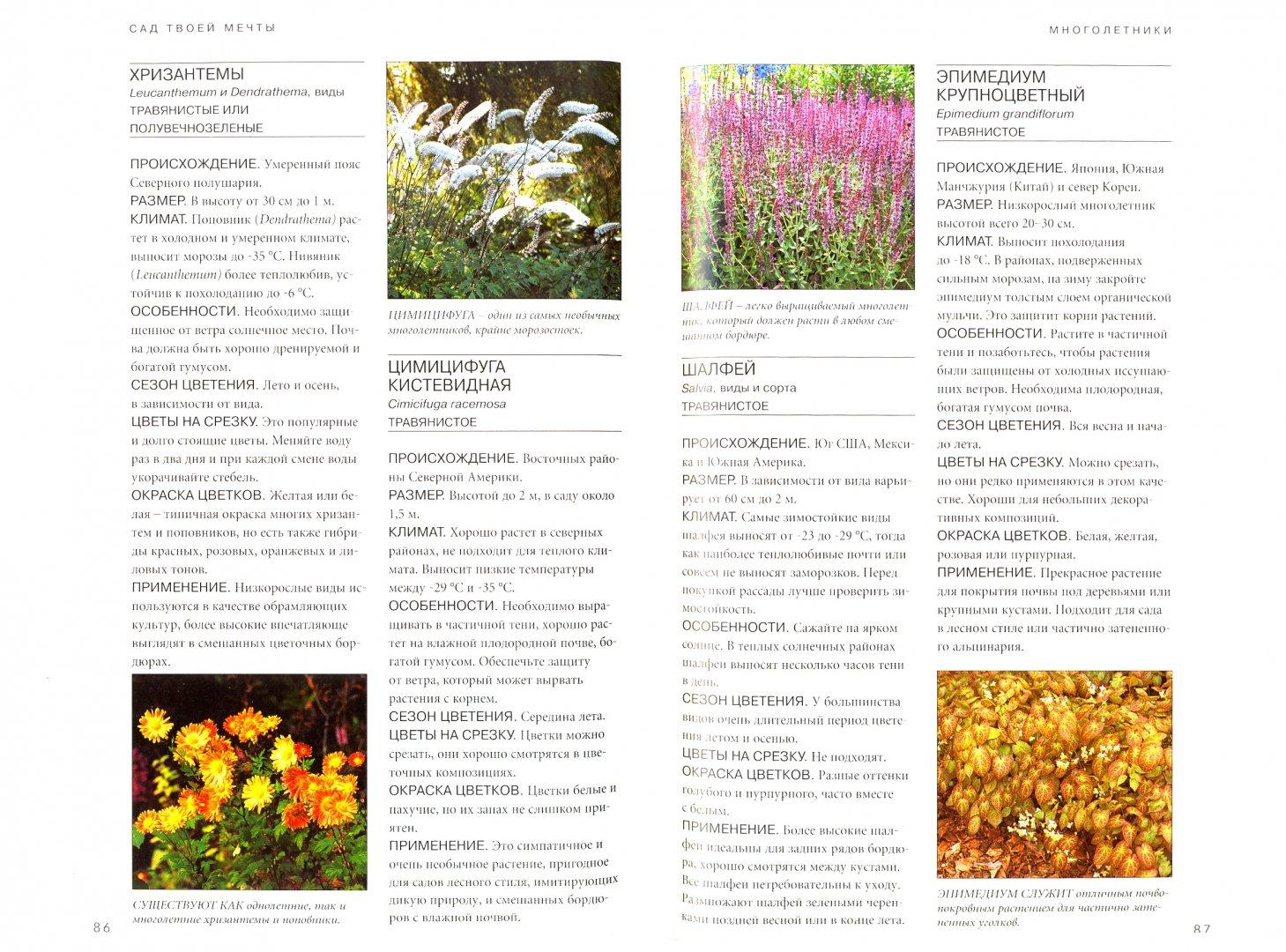 Иллюстрация 1 из 24 для Сад твоей мечты. Цветы и растения - Берни, Тугуд | Лабиринт - книги. Источник: Лабиринт