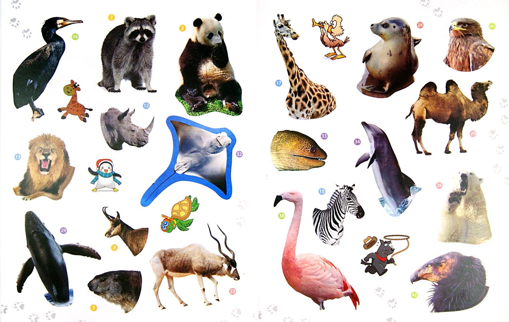 Картинка животных севера и юга