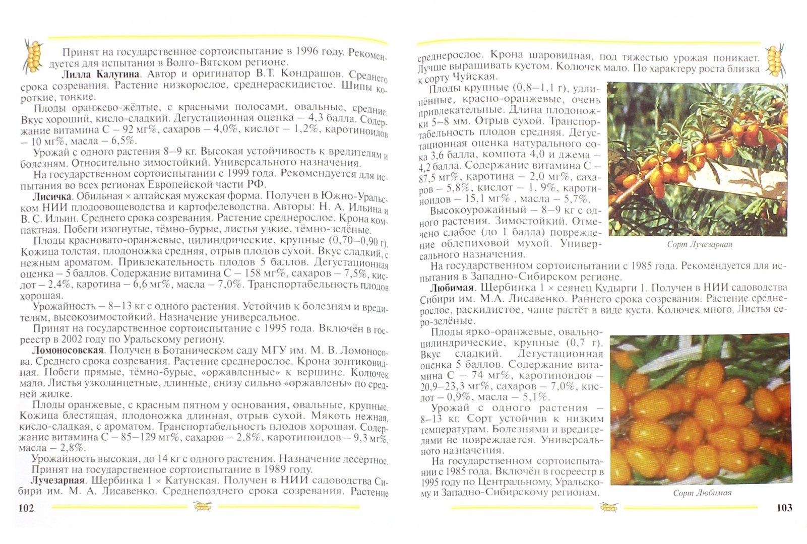 Иллюстрация 1 из 23 для Облепиха. Пособие для садоводов-любителей - Людмила Скалий   Лабиринт - книги. Источник: Лабиринт
