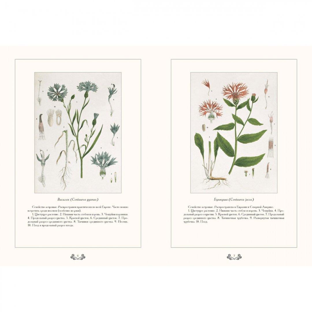 ботаническая энциклопедия растений с иллюстрациями обрезанные изображения сохраняются