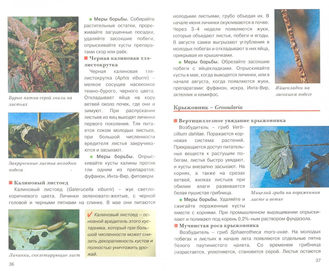 Иллюстрация 1 из 5 для Защита сада от болезней и вредителей. Искусство оформления сада - Любовь Трейвас   Лабиринт - книги. Источник: Лабиринт