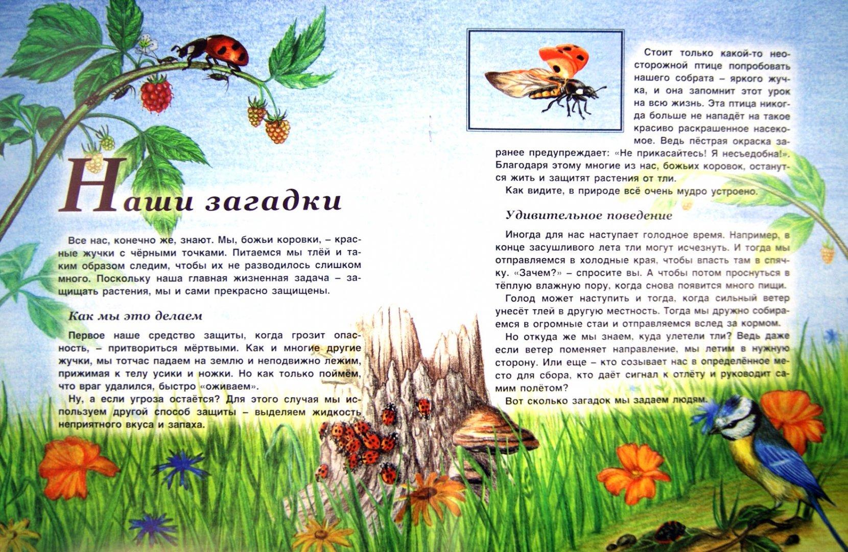 Иллюстрация 1 из 13 для Насекомые - Татьяна Жданова | Лабиринт - книги. Источник: Лабиринт