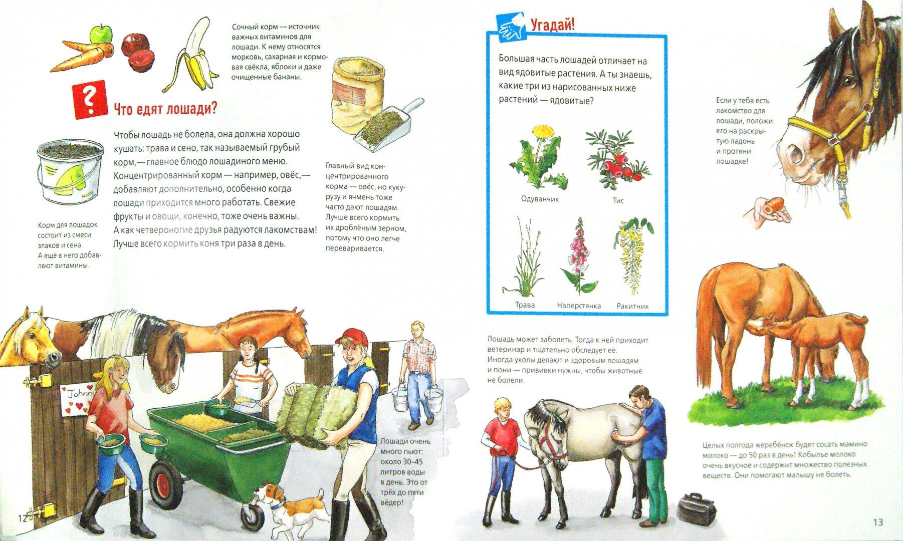 Иллюстрация 1 из 34 для Лошади и пони - Татьяна Марти   Лабиринт - книги. Источник: Лабиринт