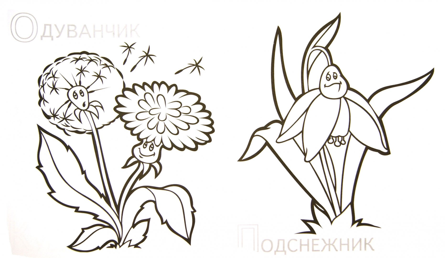 Иллюстрация 1 из 13 для Забавные полевые цветы | Лабиринт - книги. Источник: Лабиринт