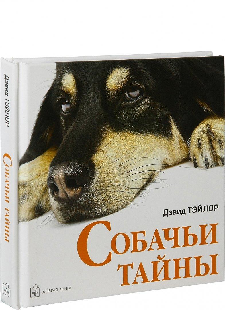 Иллюстрация 1 из 5 для Собачьи тайны - Дэвид Тэйлор | Лабиринт - книги. Источник: Лабиринт
