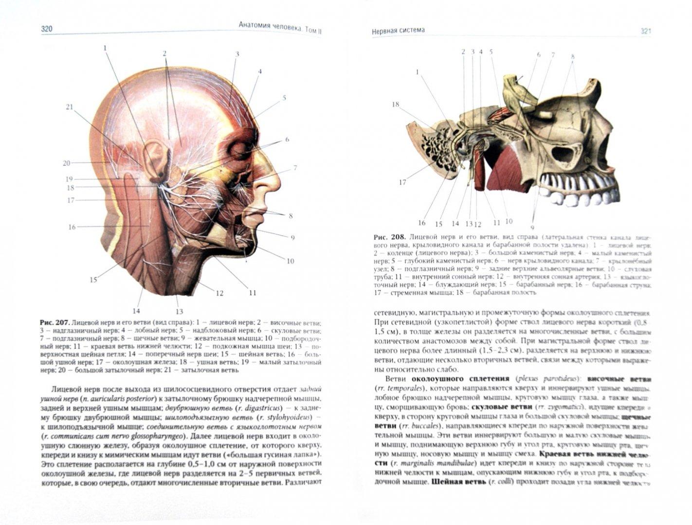 Иллюстрация 1 из 26 для Анатомия человека. Учебник. В 2-х томах. Том 2 - Сапин, Николенко, Никитюк, Чава | Лабиринт - книги. Источник: Лабиринт