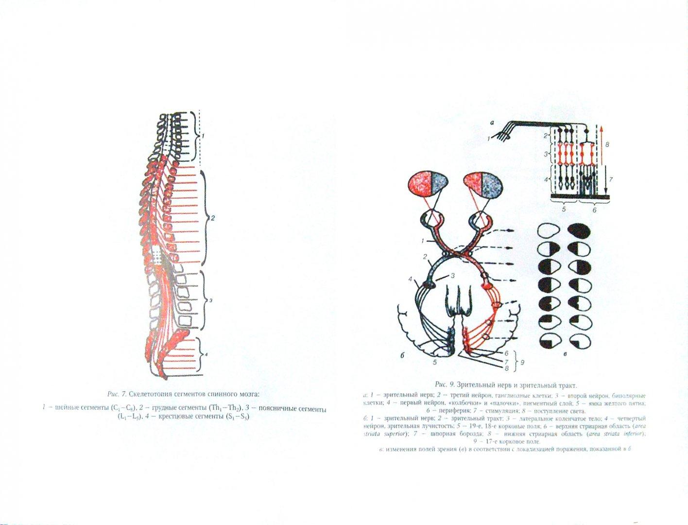 Иллюстрация 1 из 42 для Нервные болезни. Учебник для студентов медицинских вузов - Андреева, Одинак, Одинак, Базилевич   Лабиринт - книги. Источник: Лабиринт