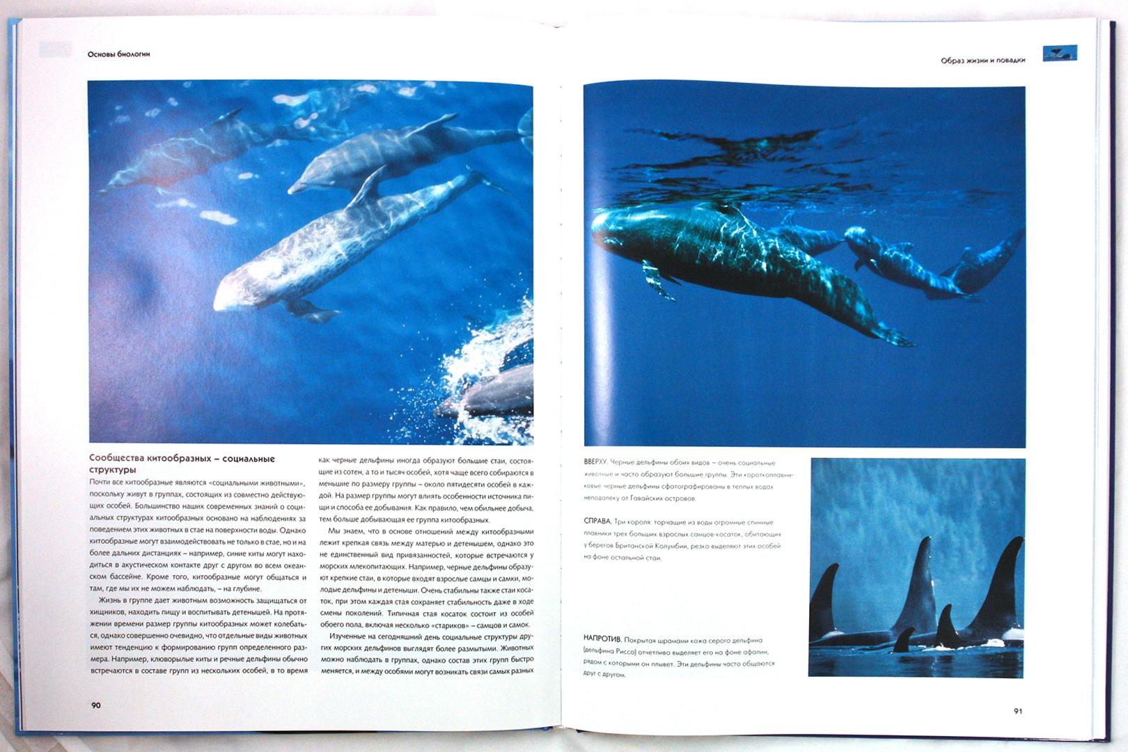 Иллюстрация 1 из 31 для Киты и дельфины. Величественные обитатели морей и океанов   Лабиринт - книги. Источник: Лабиринт