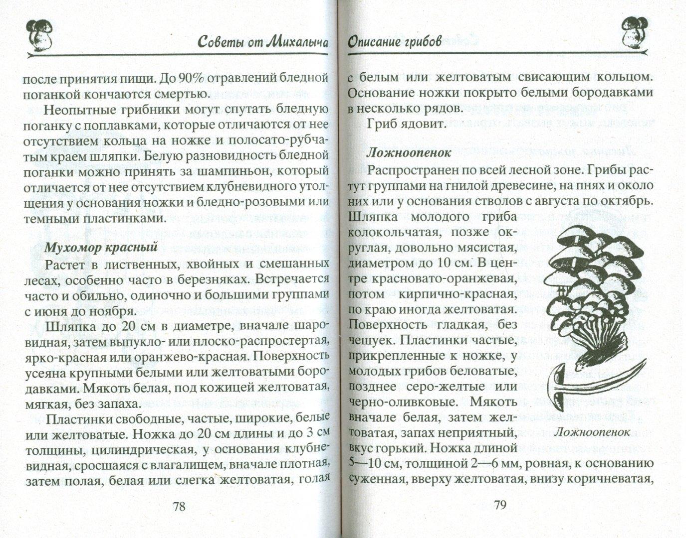 Иллюстрация 1 из 6 для Грибы. Собираем, выращиваем, заготавливаем - Николай Звонарев | Лабиринт - книги. Источник: Лабиринт