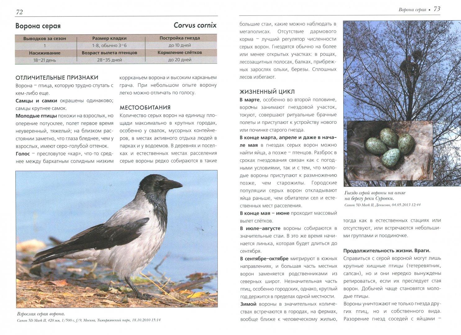Иллюстрация 1 из 45 для Жизнь и поведение птиц - Василий Вишневский | Лабиринт - книги. Источник: Лабиринт