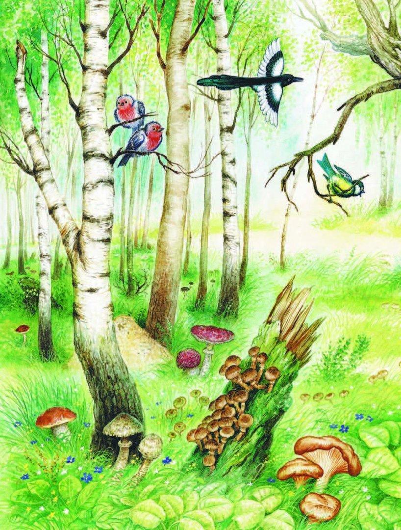 Картинки о лесе детские