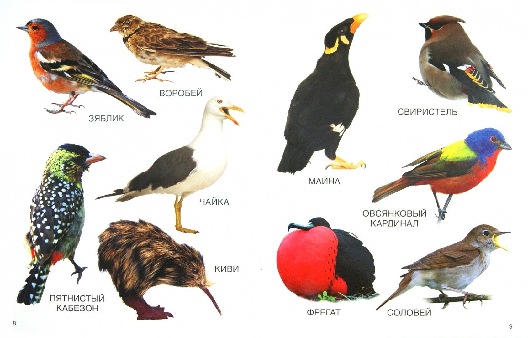 все птицы по алфавиту стену данный
