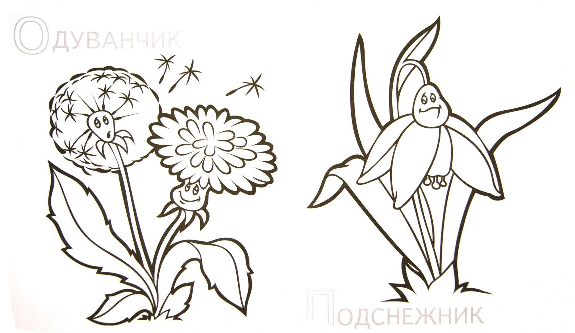 Иллюстрация 1 из 13 для Забавные полевые цветы   Лабиринт - книги. Источник: Лабиринт