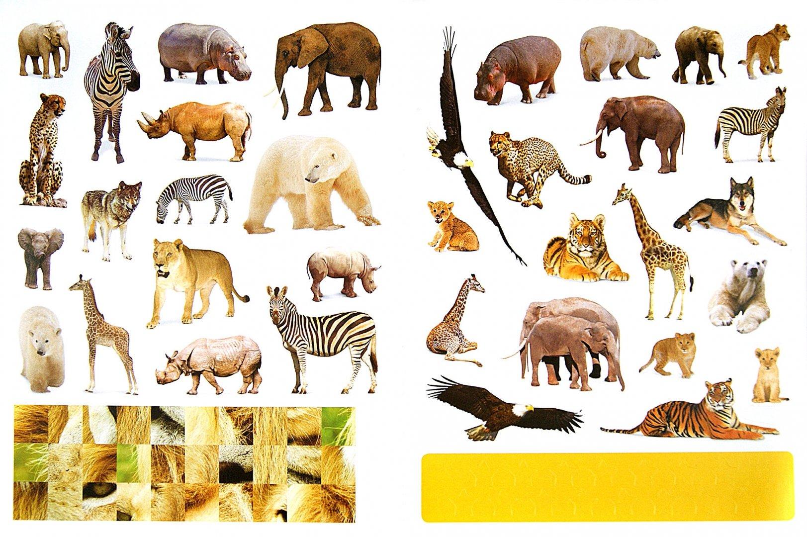 Животные нашей полосы картинки