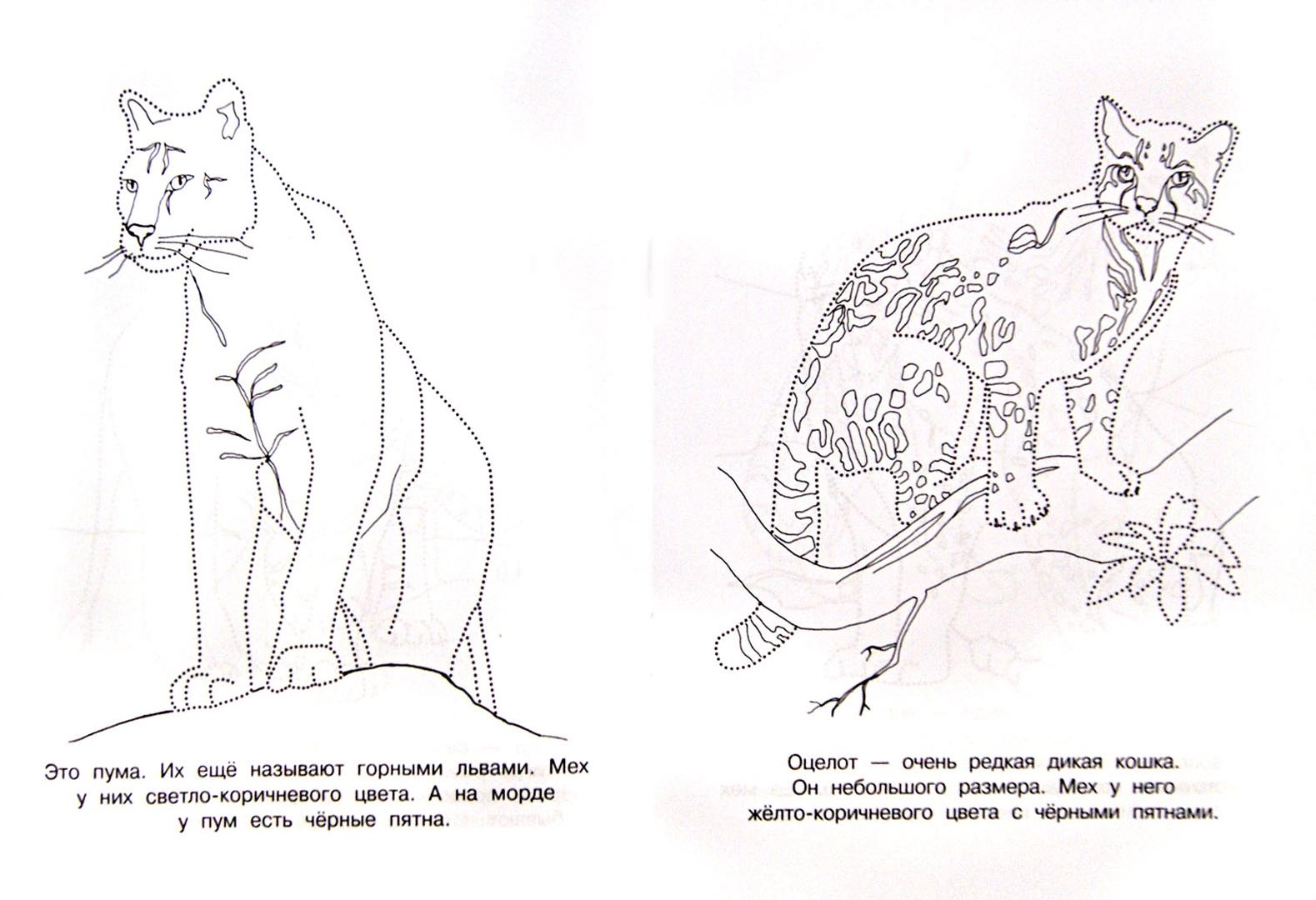 Животные красной книги россии раскраска с описанием