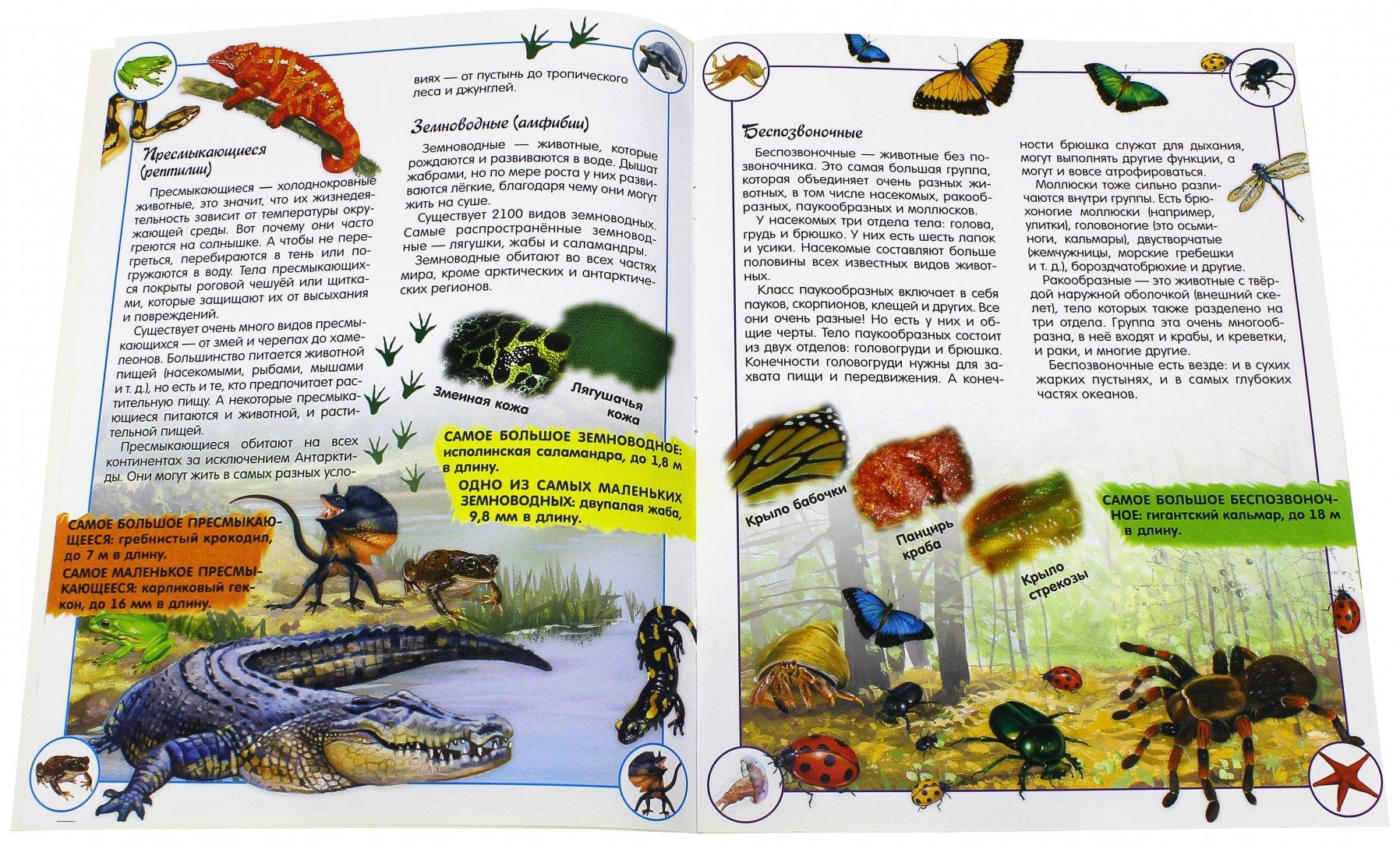 Иллюстрация 1 из 43 для Наша планета. Животные - Кэти Хьюот   Лабиринт - книги. Источник: Лабиринт