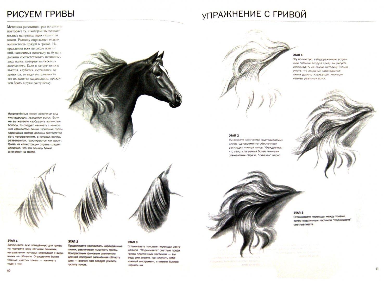 Иллюстрация 1 из 8 для Учимся рисовать лошадей - Ли Хэммонд | Лабиринт - книги. Источник: Лабиринт