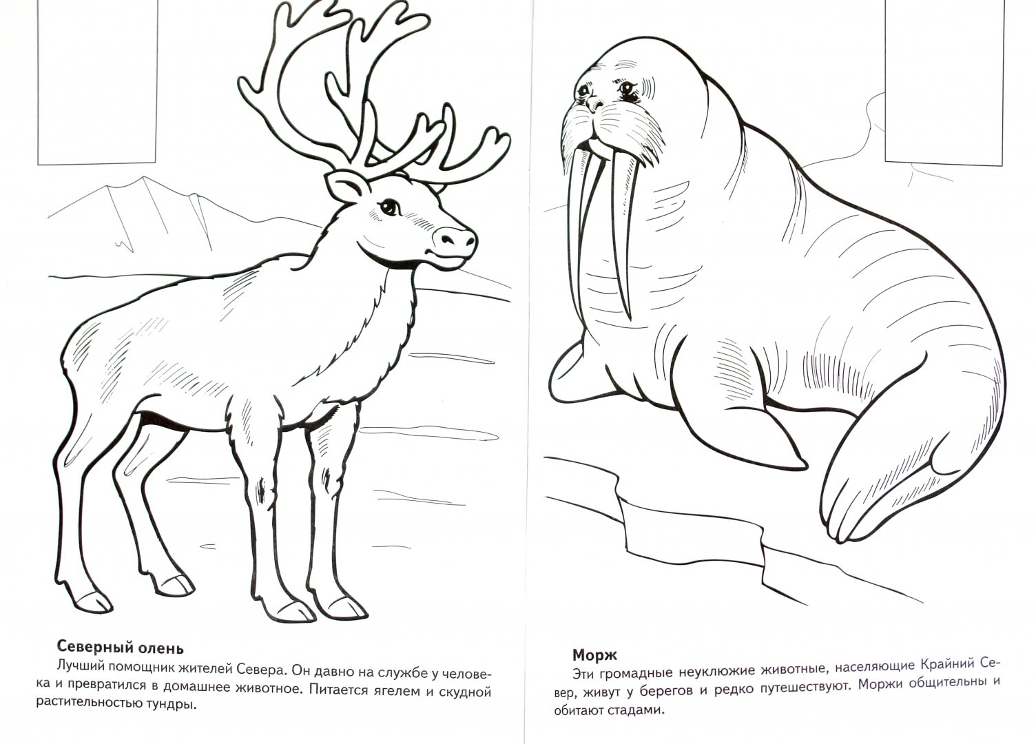 раскрасить картинку животного из красной книги предыдущих версиях делаем