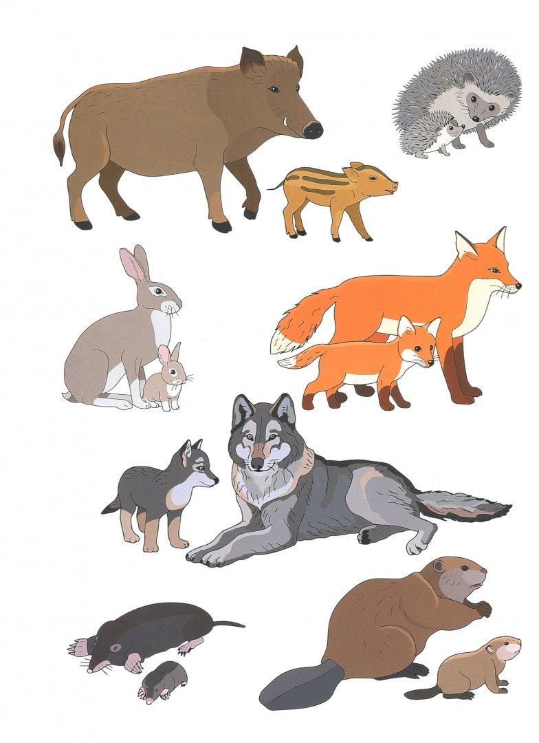 Февраля, картинки животные и их детеныши
