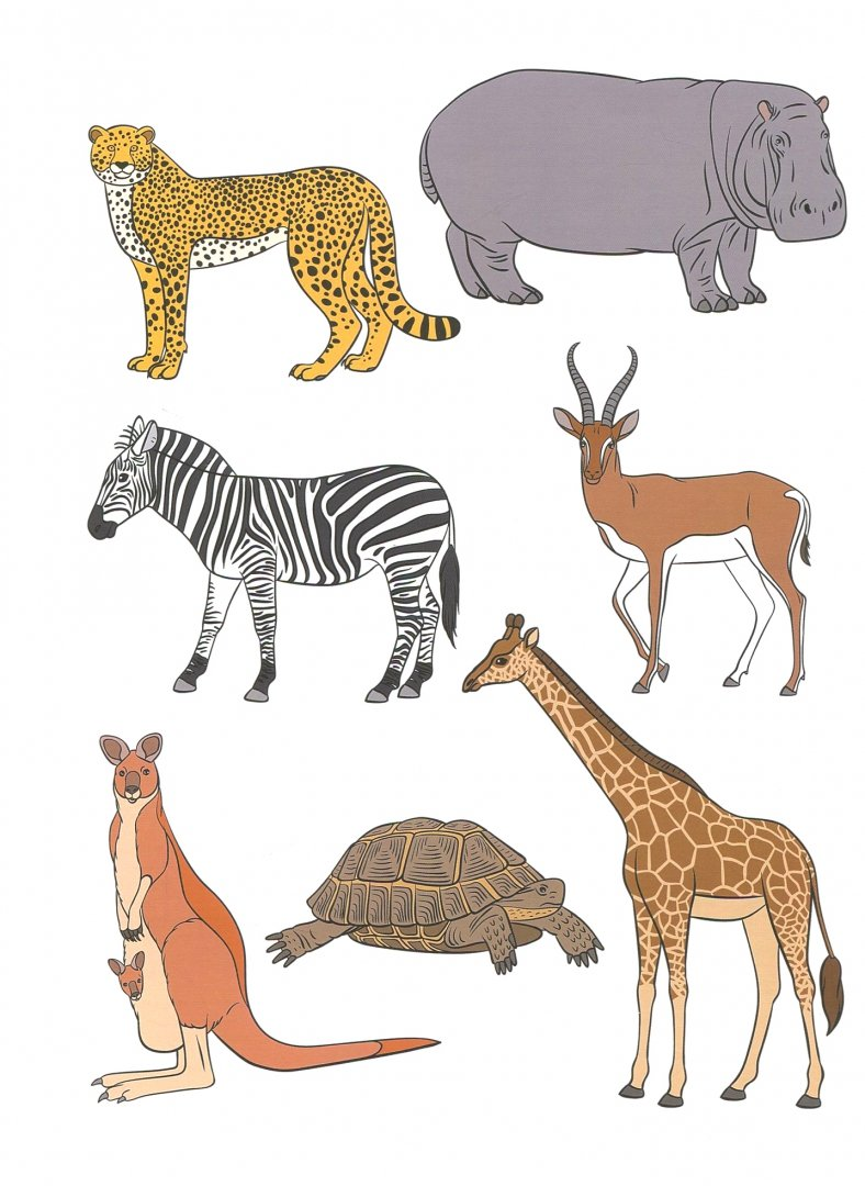 Прикольных, картинки животные и птицы жарких стран для детей