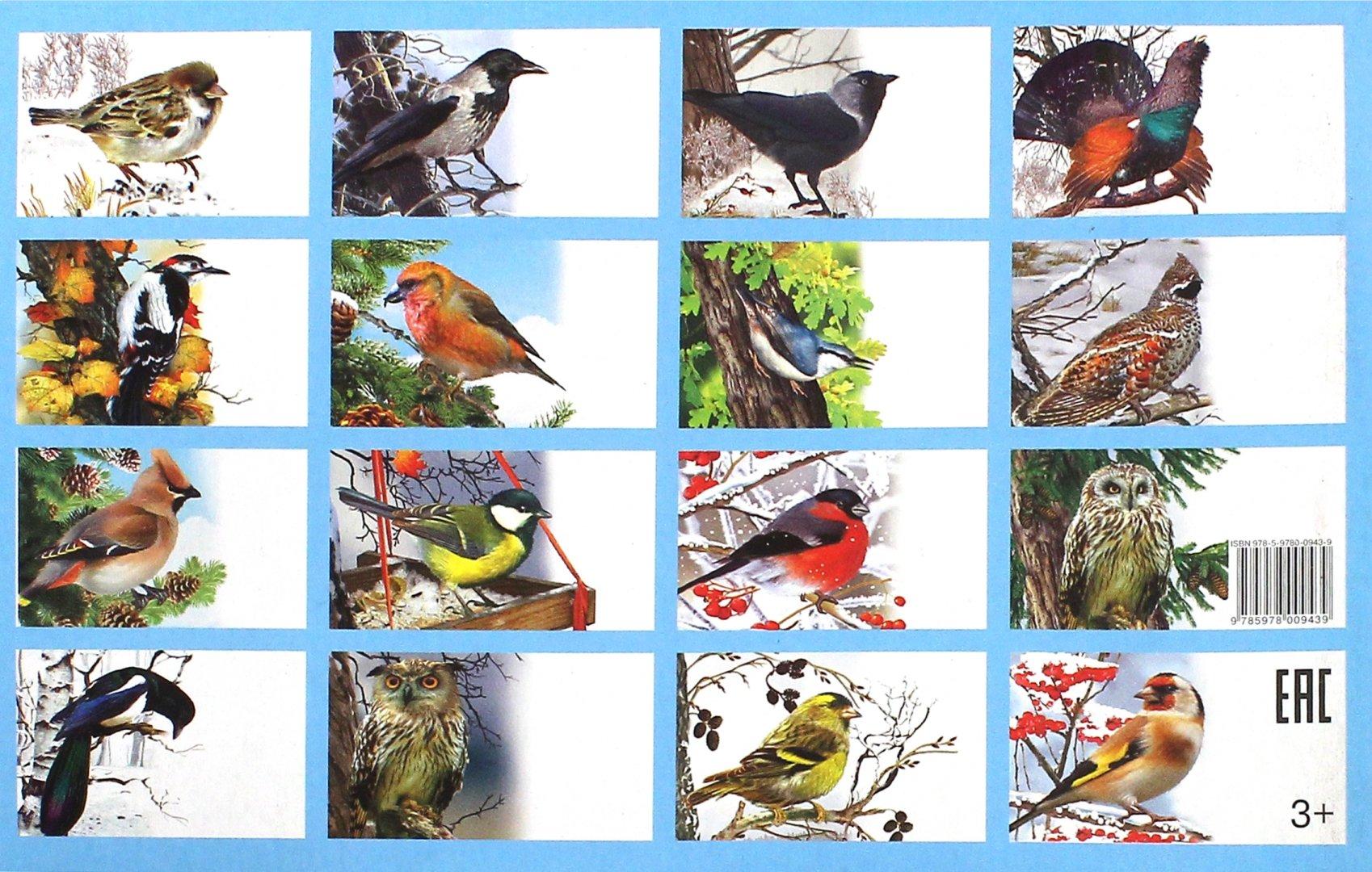 Птицы россии картинки с названиями птиц