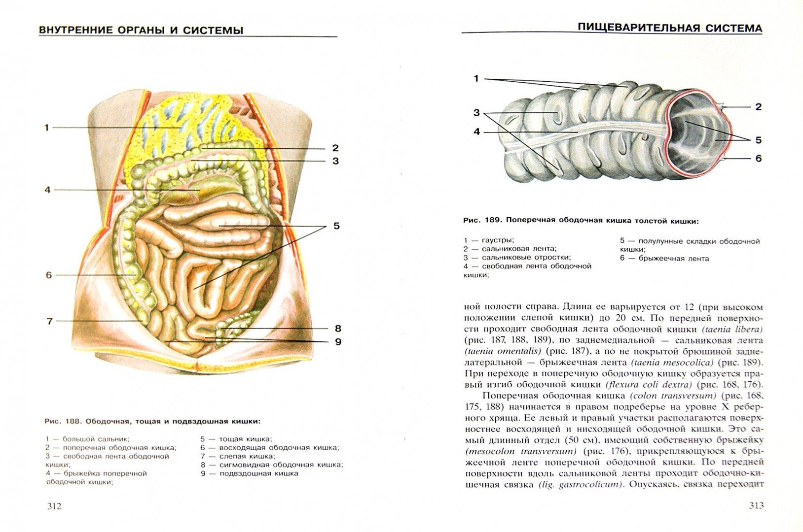 Иллюстрация 1 из 18 для Атлас анатомии человека | Лабиринт - книги. Источник: Лабиринт