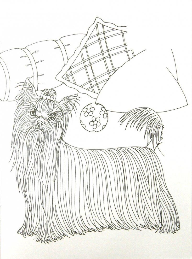 Иллюстрация 1 из 7 для Собаки. Волшебные прозрачные страницы с наклейками - Н. Истомина   Лабиринт - книги. Источник: Лабиринт