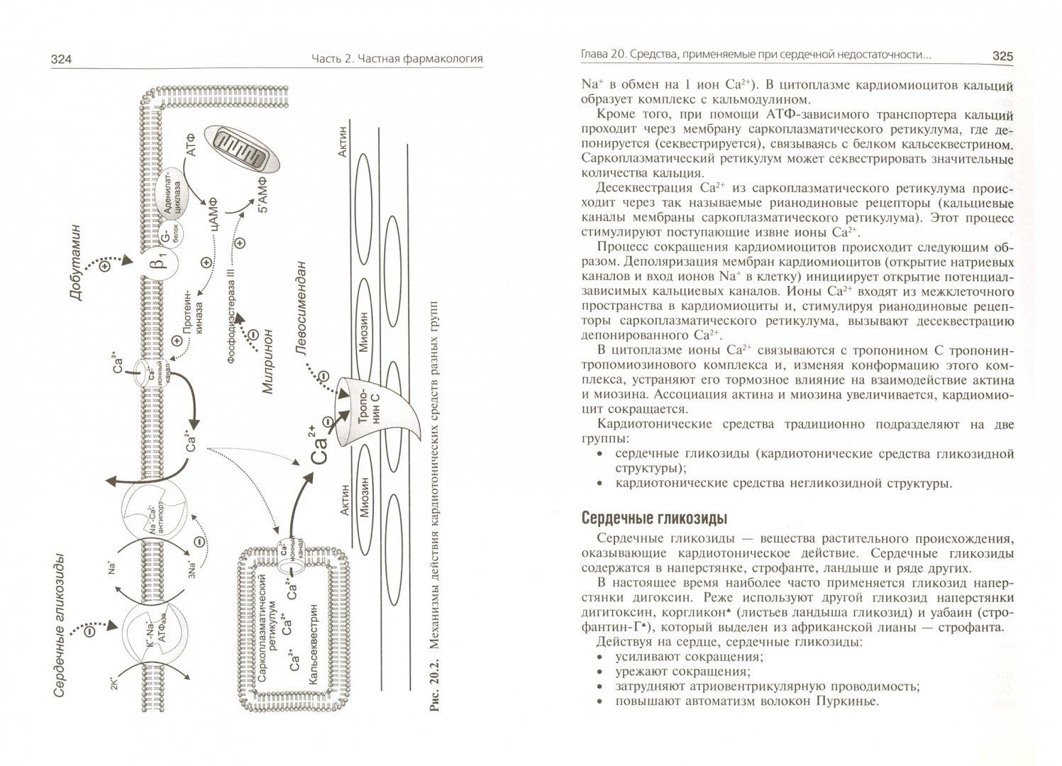 Иллюстрация 1 из 5 для Фармакология. Ultra light. Учебное пособие - Ренад Аляутдин | Лабиринт - книги. Источник: Лабиринт