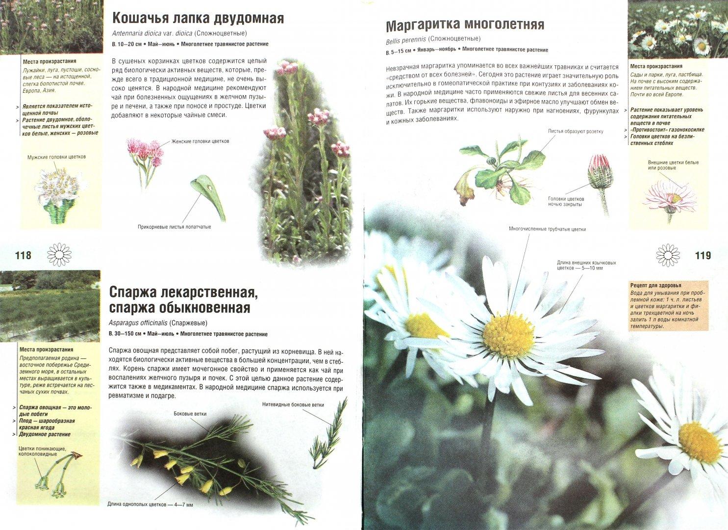 травник лекарственные растения картинки исправления коснулись