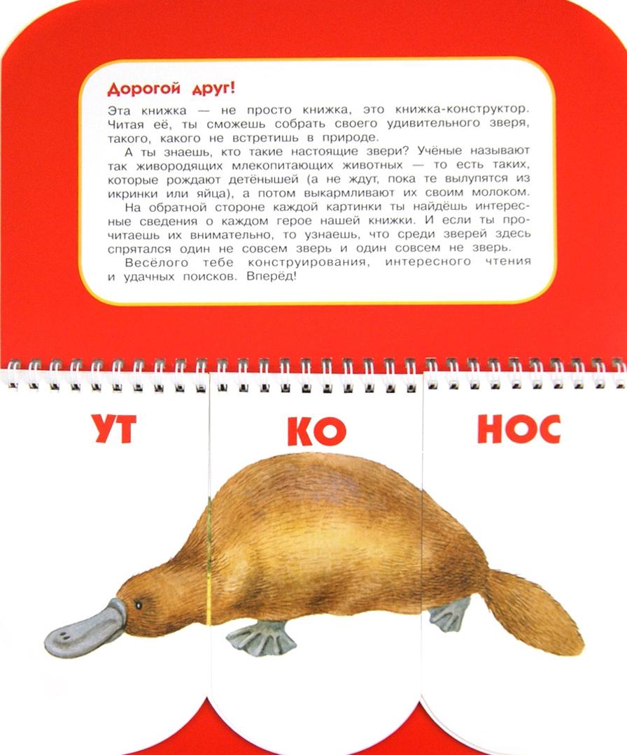 Иллюстрация 1 из 20 для Пере-звери. Собери неведому зверушку. 512 смешных зверей под одной обложкой - Н. Федорова | Лабиринт - книги. Источник: Лабиринт
