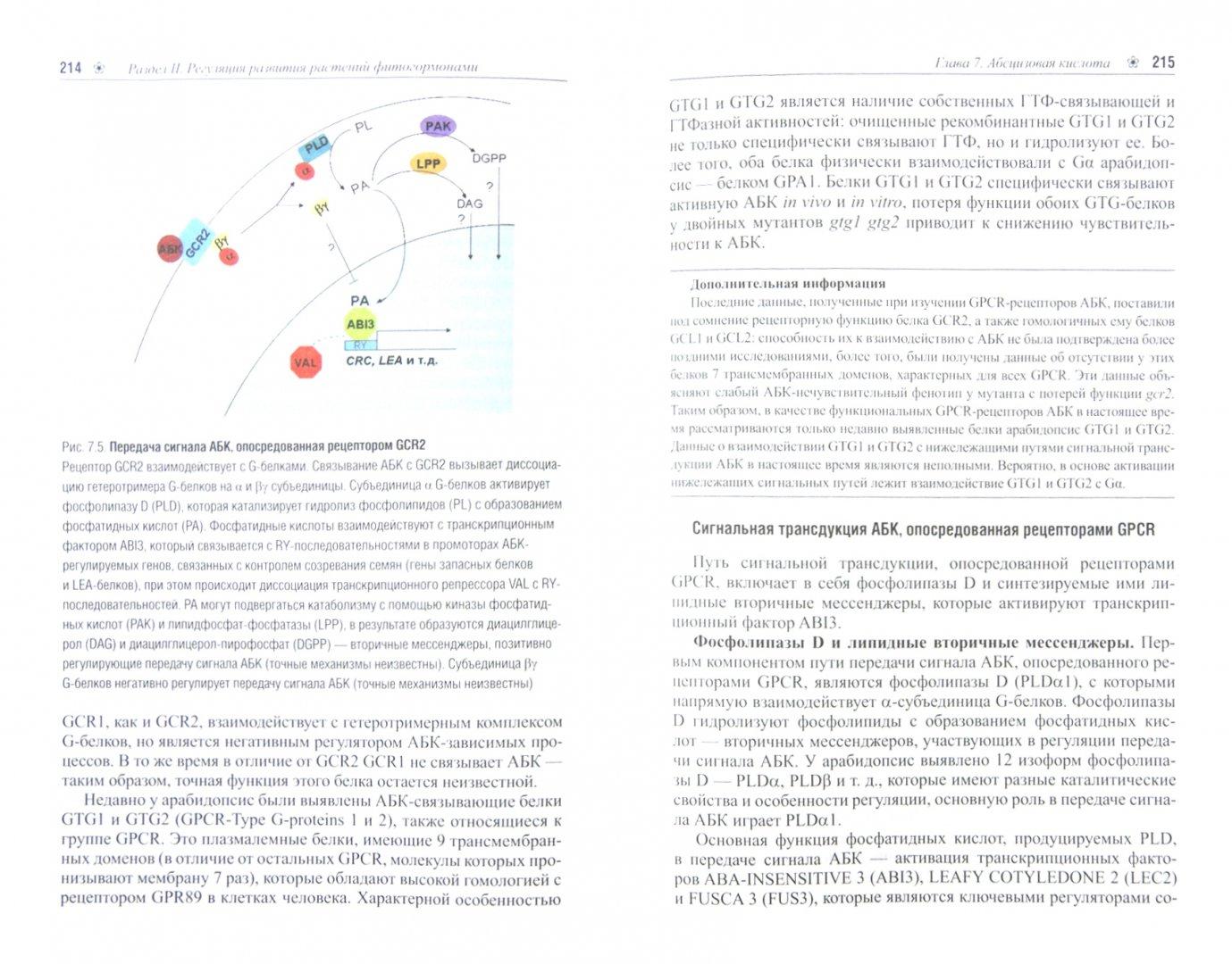 Иллюстрация 1 из 9 для Генетика развития растений. Учебник (+CD) - Лутова, Ежова, Додуева, Осипова | Лабиринт - книги. Источник: Лабиринт