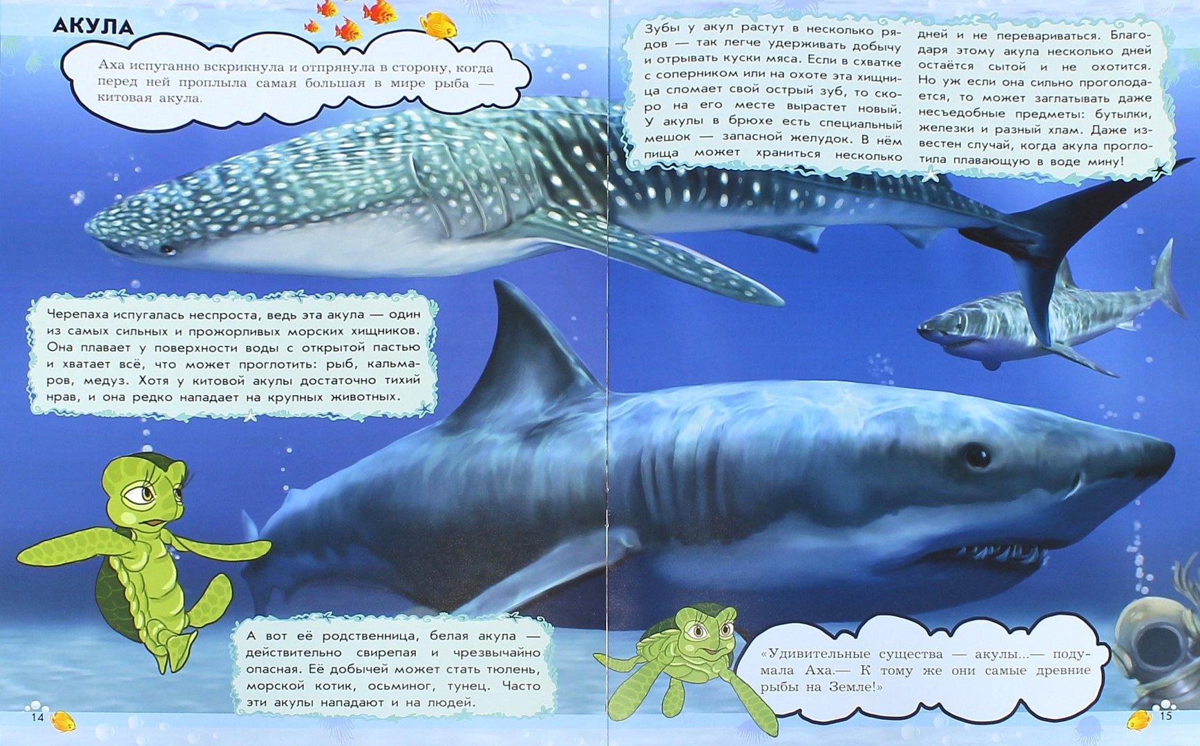 Иллюстрация 1 из 12 для О чём мечтает кашалот? Обитатели морей и океанов - Анна Макулина | Лабиринт - книги. Источник: Лабиринт