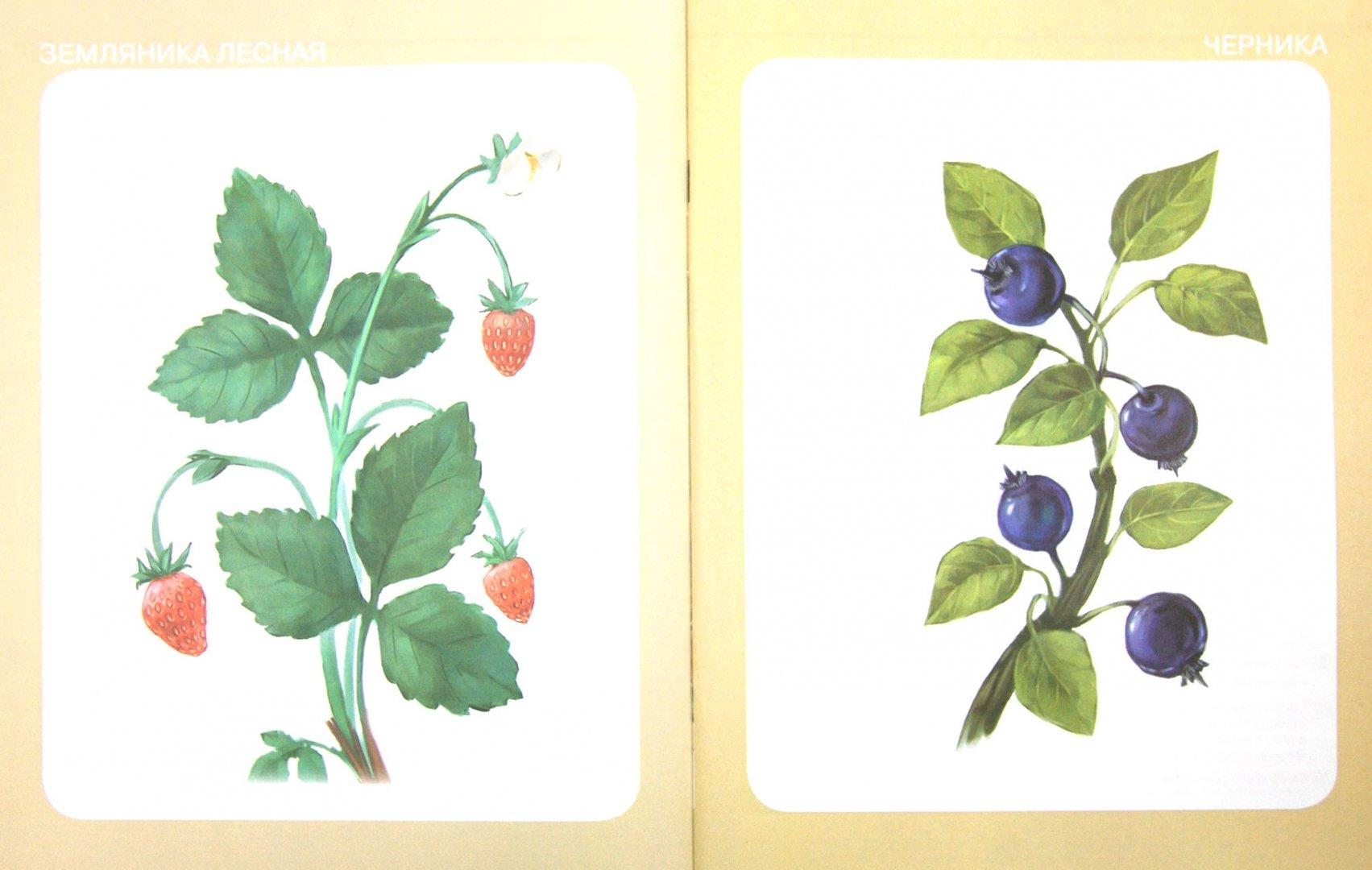 Ягоды лесные картинки для детского сада