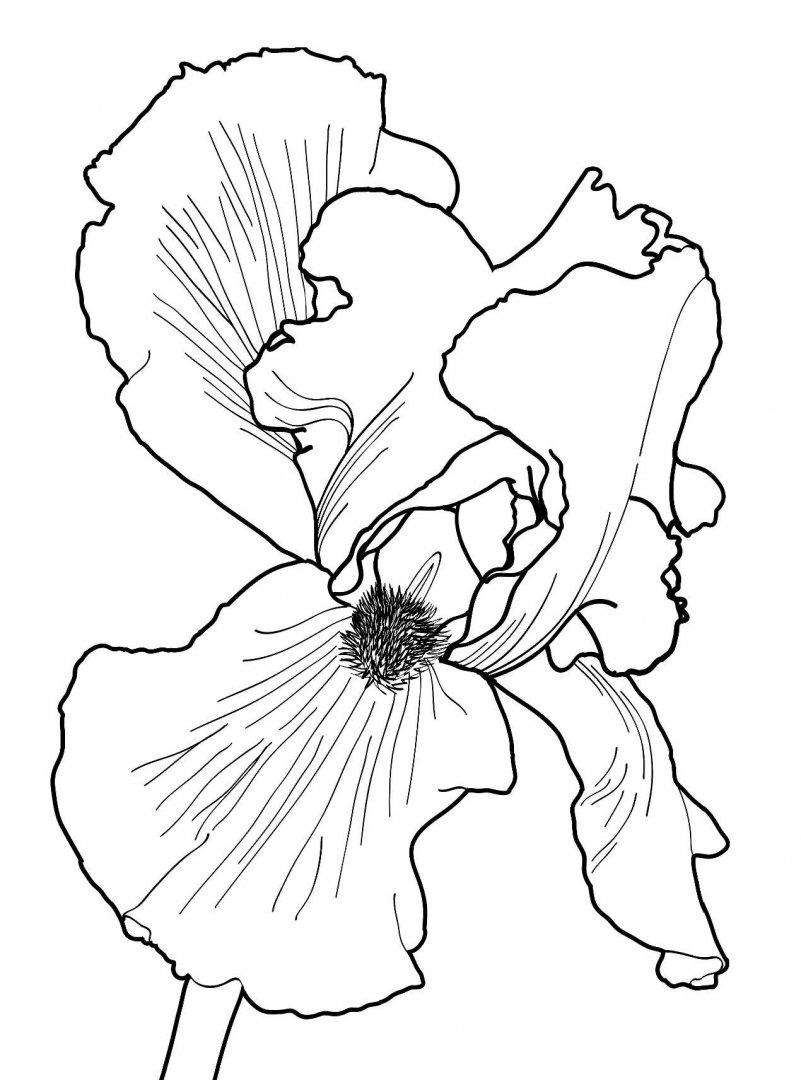 Иллюстрация 9 из 34 для Дивный сад. Раскраска-антистресс ...