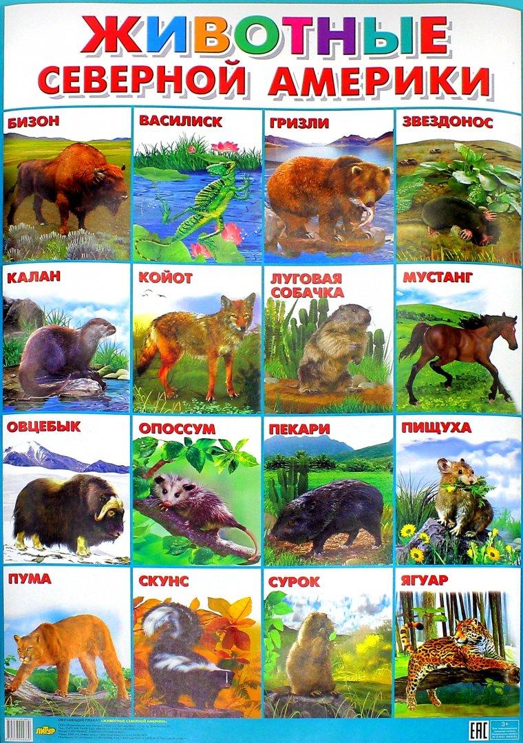 Северная америка картинки животный мир свайера бывает