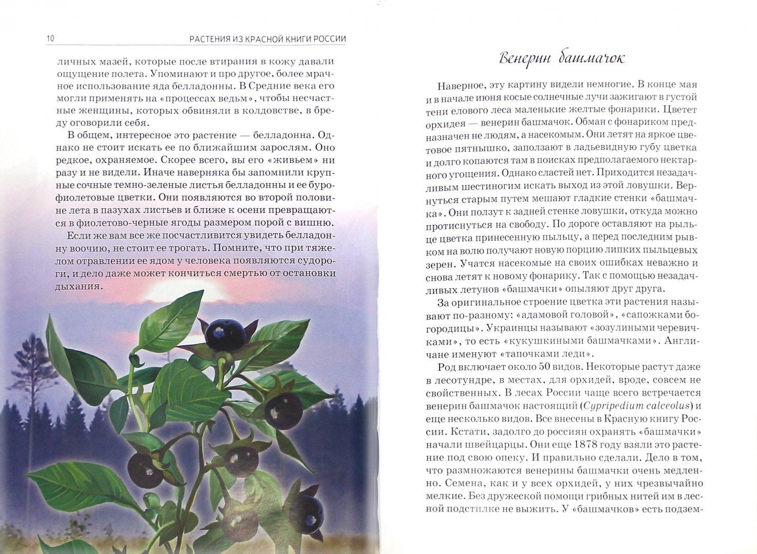 Иллюстрация 1 из 28 для Растения из Красной книги России - Юлия Дунаева   Лабиринт - книги. Источник: Лабиринт