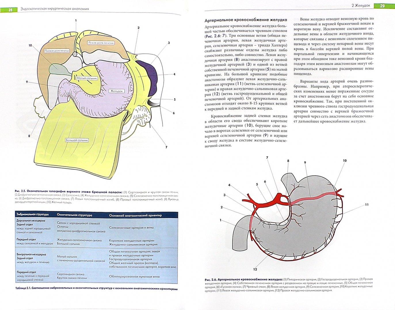 Иллюстрация 1 из 5 для Эндоскопическая хирургическая анатомия. Топография для лапароскопии, гастроскопии и колоноск. (+CD) - Киршняк, Грандерат, Древс | Лабиринт - книги. Источник: Лабиринт