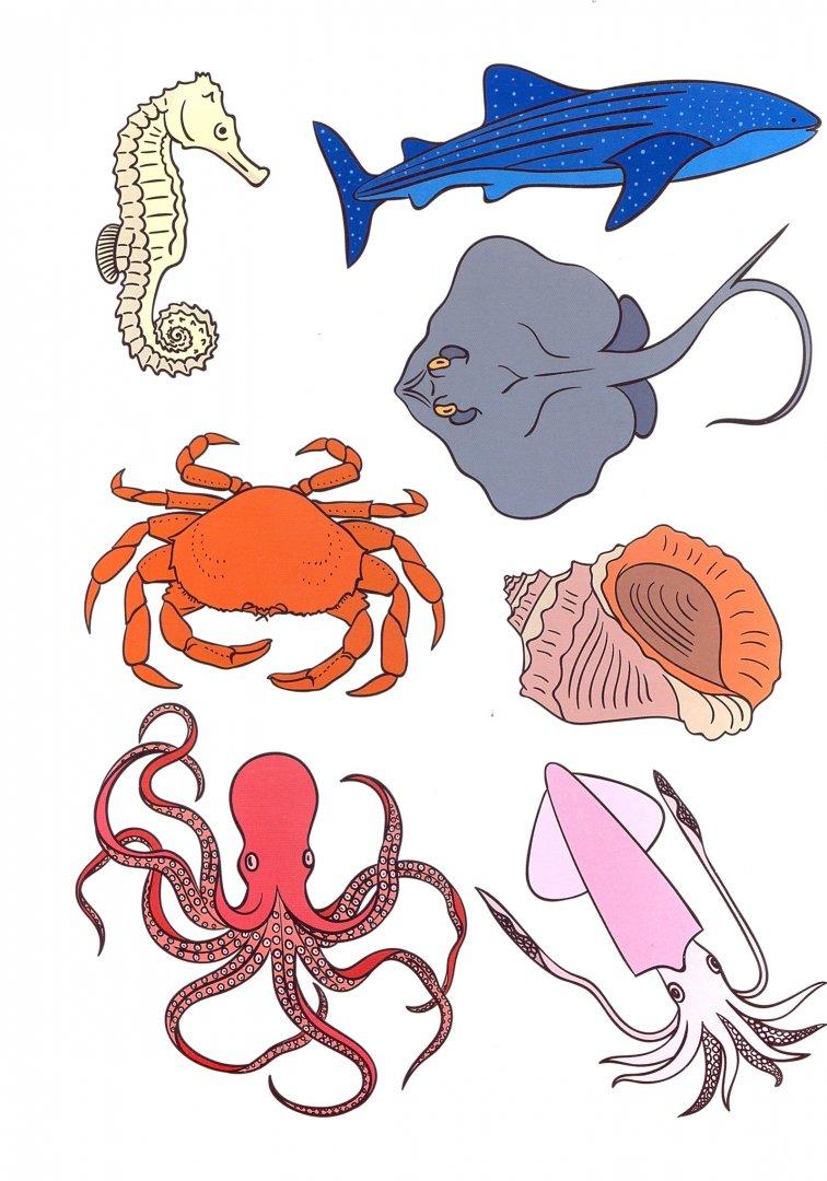 конфуз разрезные картинки морские обитатели старшая группа ведет