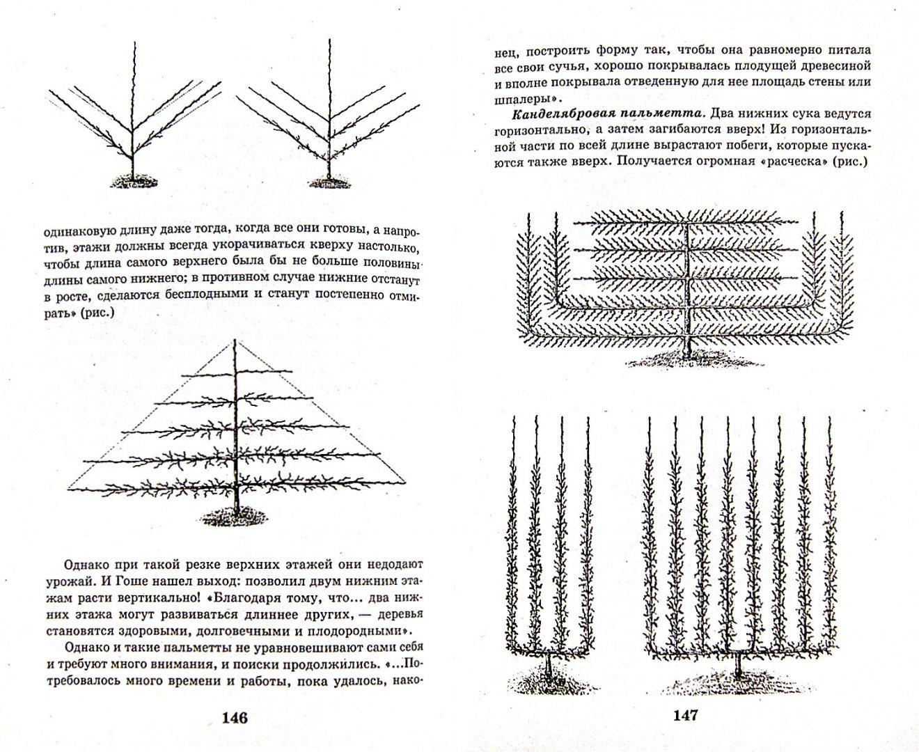 Иллюстрация 1 из 7 для Умный сад в подробностях - Николай Курдюмов | Лабиринт - книги. Источник: Лабиринт