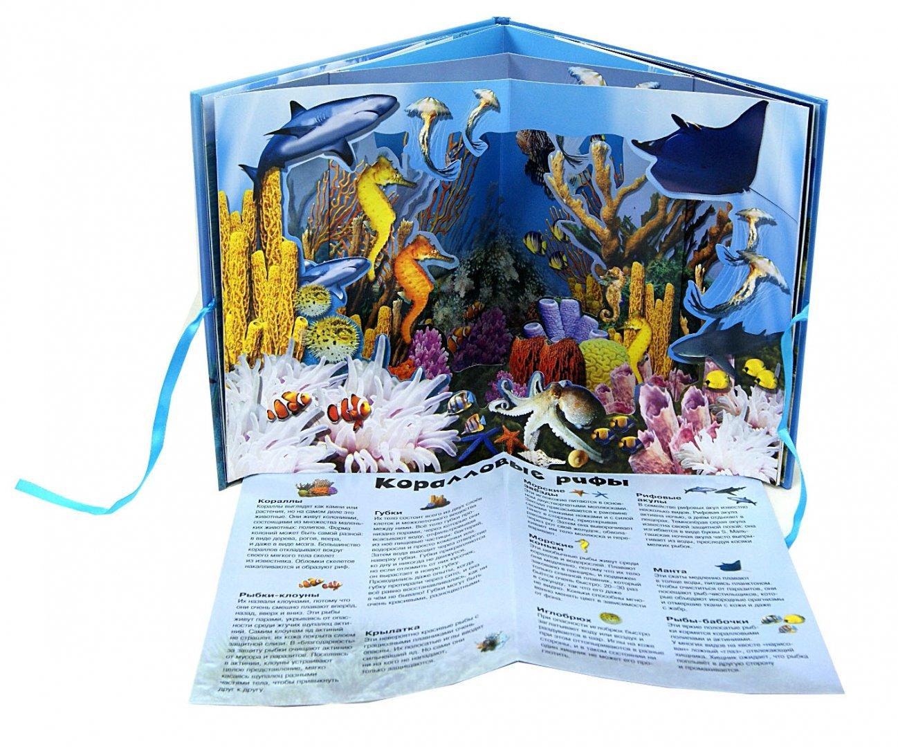 Иллюстрация 1 из 20 для Удивительный океан | Лабиринт - книги. Источник: Лабиринт